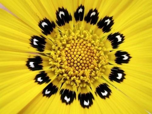 closeup_photos_06.jpg (54 KB)