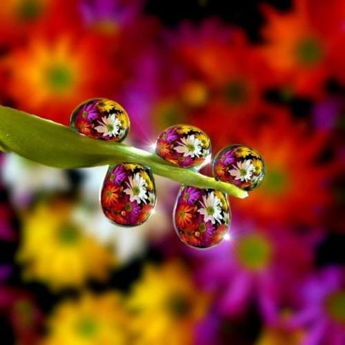 closeup_photos_26.jpg (47 KB)