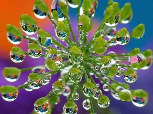 closeup_photos_53.jpg (62 KB)