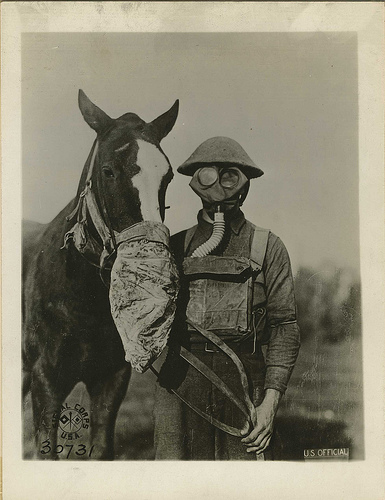 horse Horse Gas Masks wtf Gas Masks Cute As Hell Animals